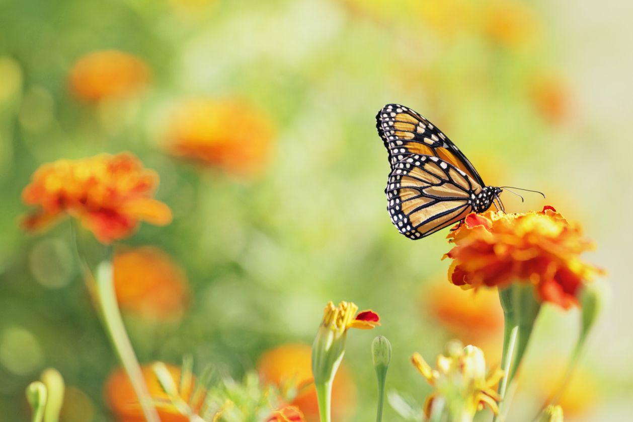 Бабочка символизирует трансформацию, которую многие находят в Аль-Аноне