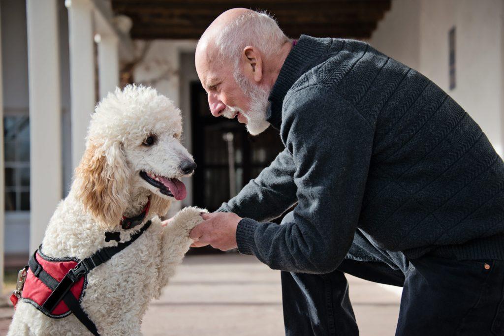 Законы наличия служебной собаки, когда у вас ПТСР