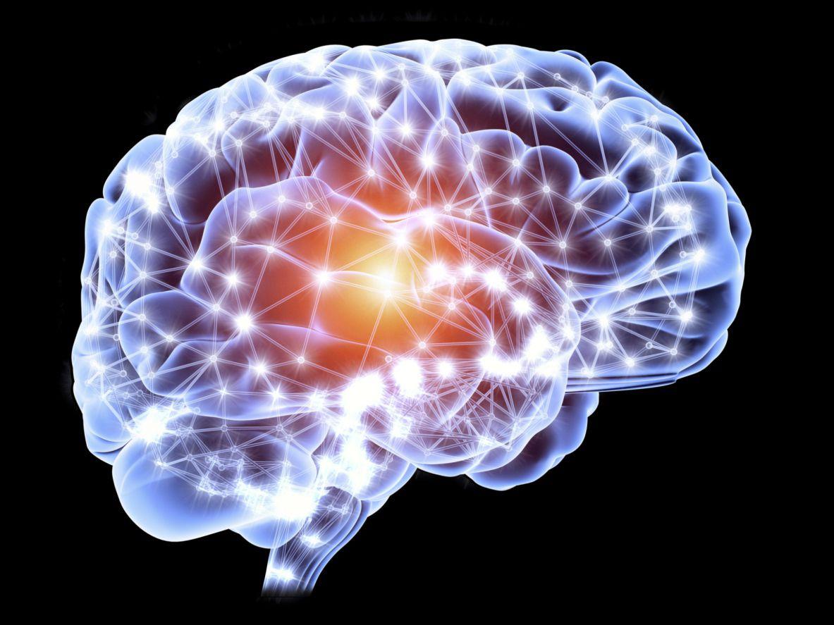 Какой мозговой белок связан с алкогольным поведением?