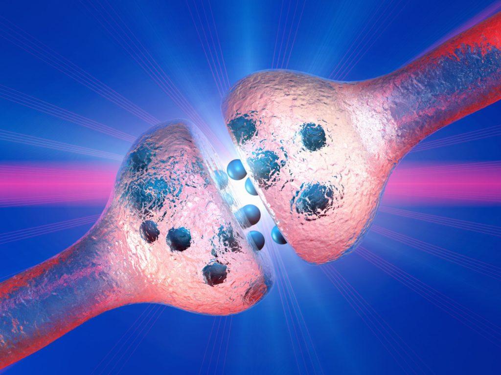 Как селективные ингибиторы обратного захвата серотонина (СИОЗС) работают на БЛД
